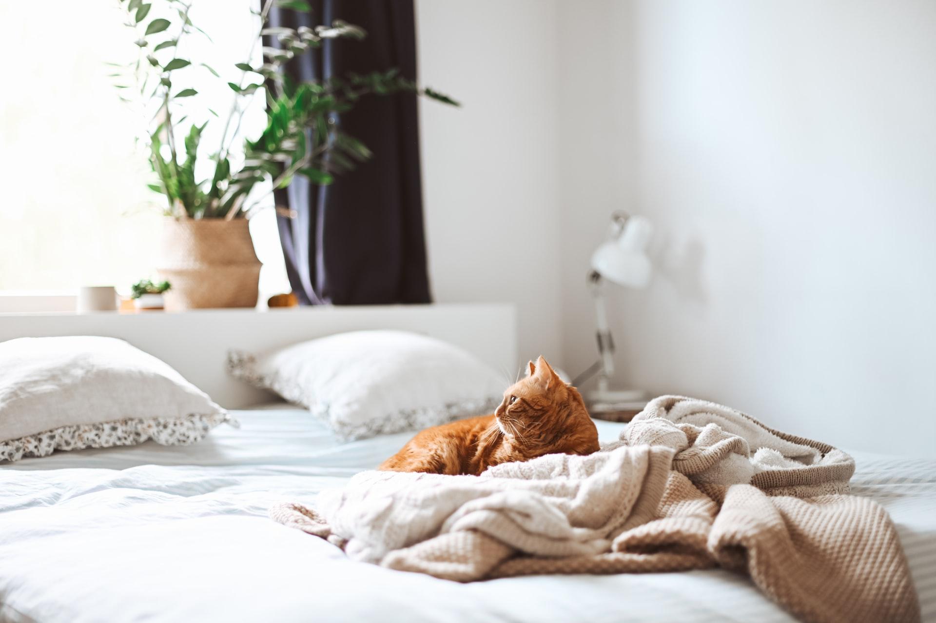 Forskjellig søvnbehov hos barn og voksne